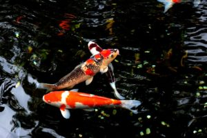 Pond Medic - Care For Your Pond By Akwa Products